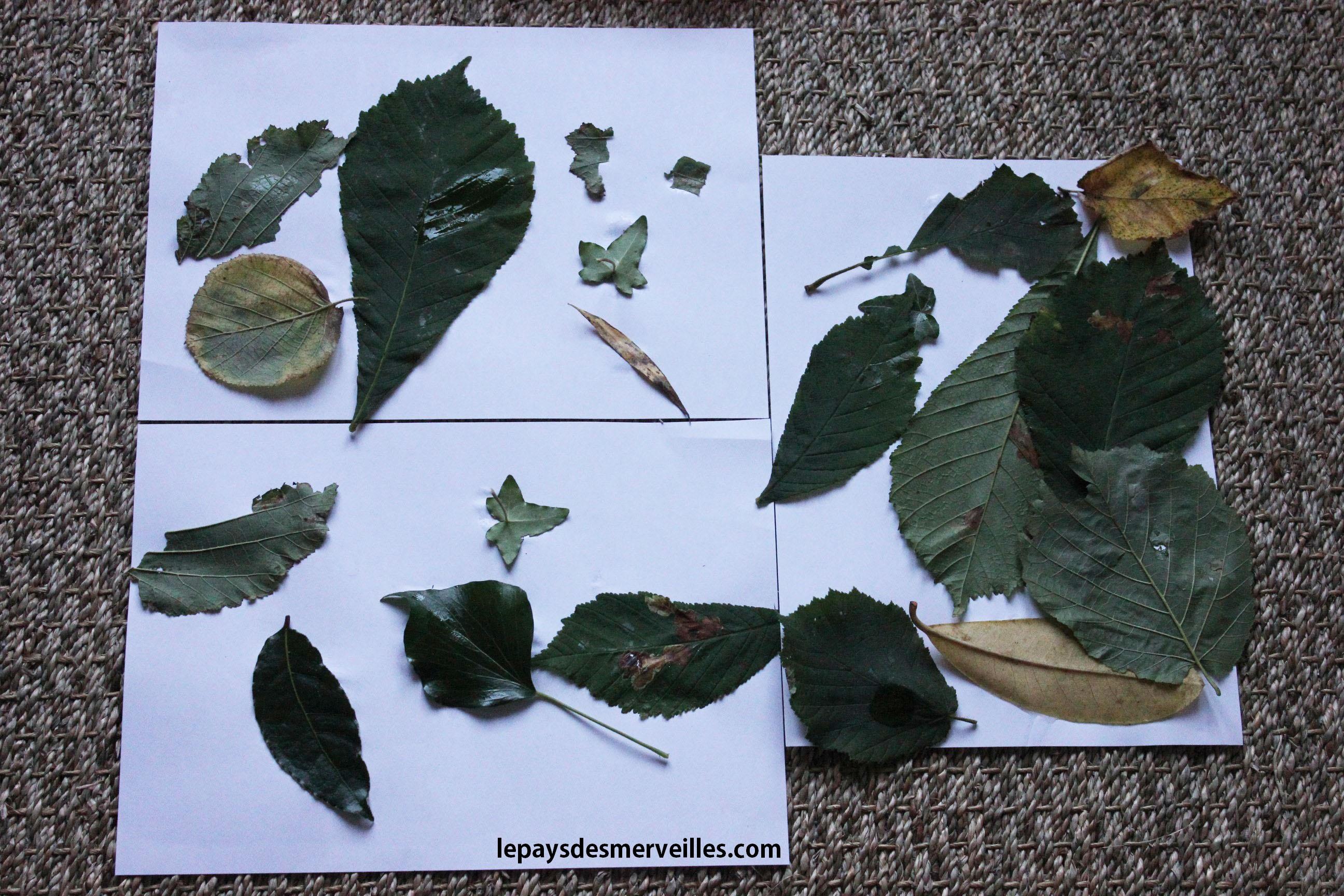 premier bricolage d 39 automne collage de feuilles d 39 arbre le pays des. Black Bedroom Furniture Sets. Home Design Ideas