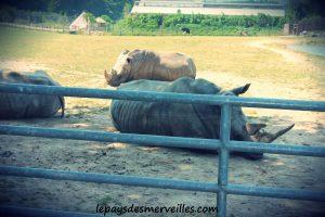 cerza rhinoceros