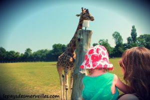 cerza girafe
