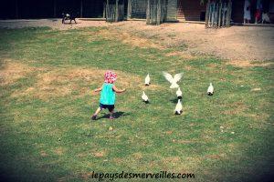 cerza oiseaux de la ferme pedagogique
