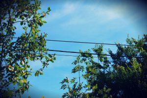 des oiseaux sur le fil