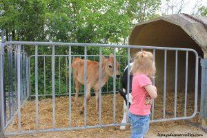 Séjour ferme vaches laitières et veaux (26)