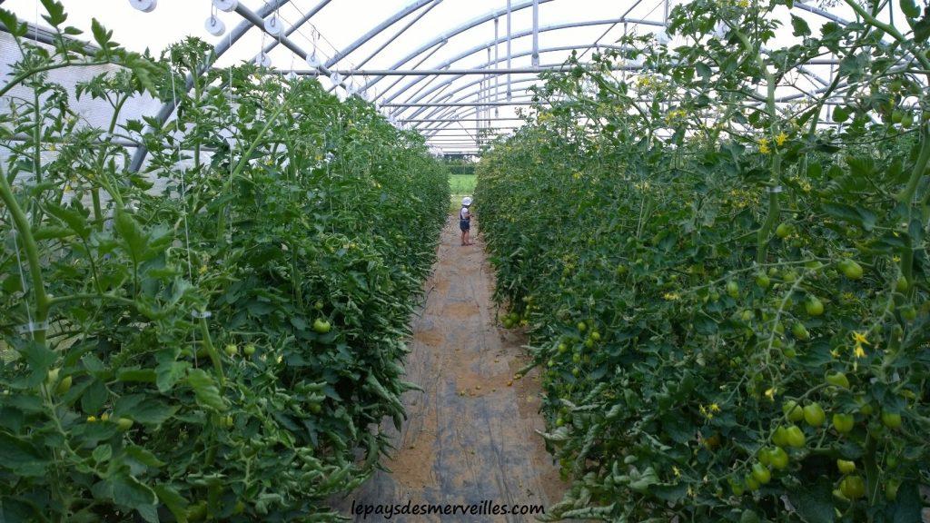 cueillette fruits et légumes cueillette pithienville