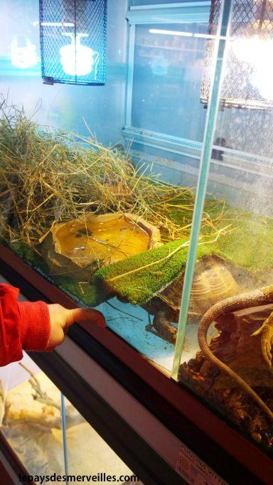 promenade à la jardinerie animalerie - tortue