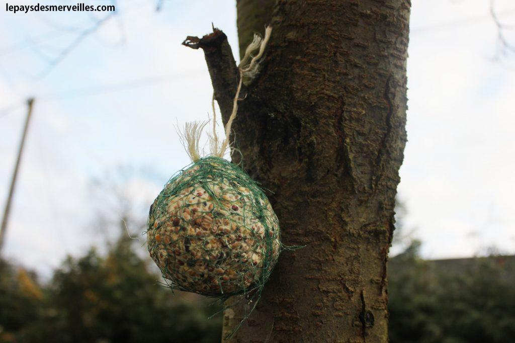 nourrir les oiseaux (14)