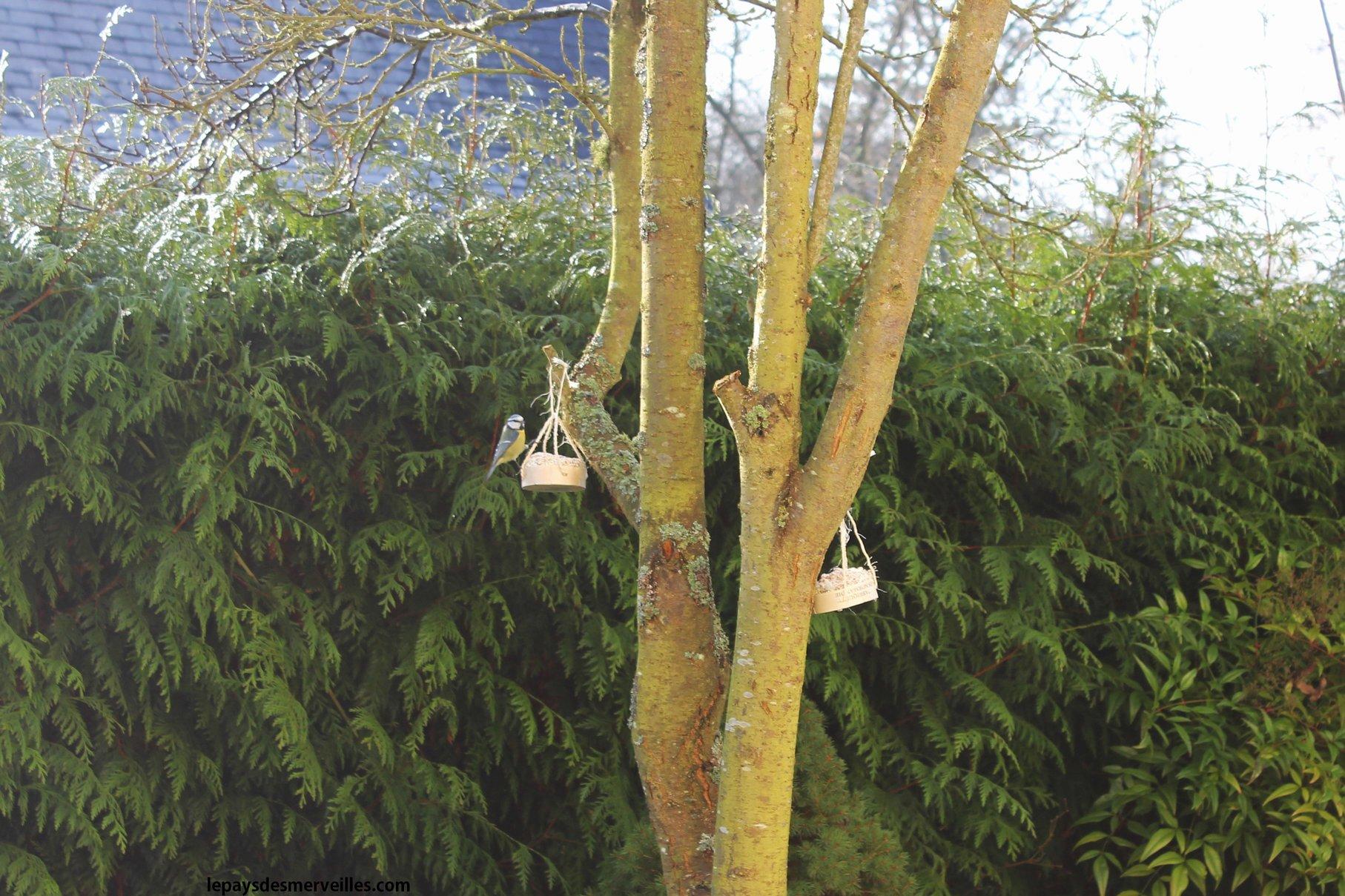 Diy comment nourrir les oiseaux en hiver une activit faire avec les enfants le pays des - Comment effrayer les oiseaux ...