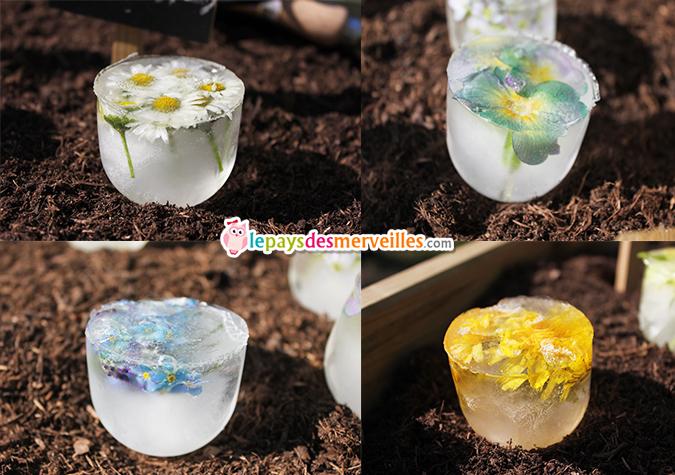 Glaçons avec des fleurs