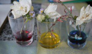 experience fleurs colorées