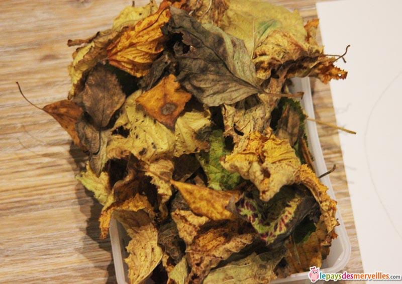 matériel activité d'automne pomme et feuille (2)
