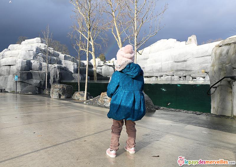 bassin manchot zoo de paris