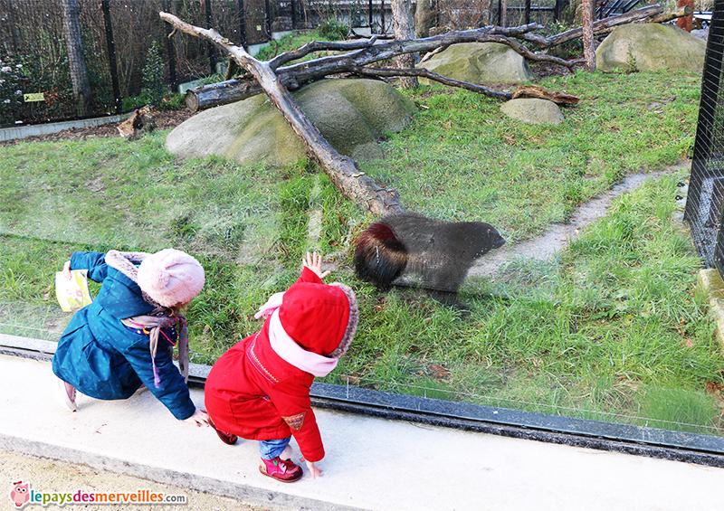 glouton zoo de vincennes