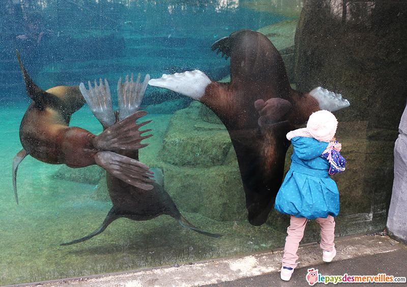 otaries zoo de paris