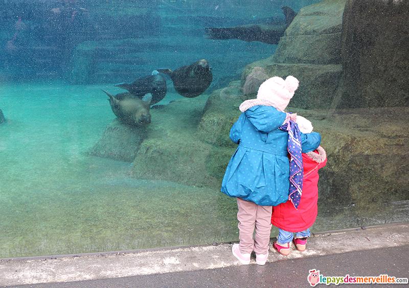 otaries dans leur bassin au zoo de paris