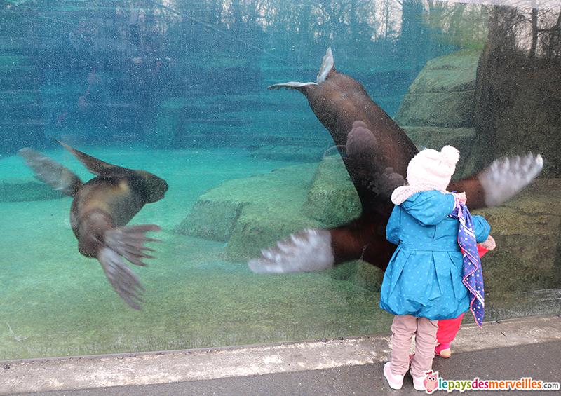 danse des otaries au zoo de Vincennes