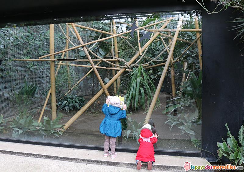 parc zoologique de paris avec les enfants