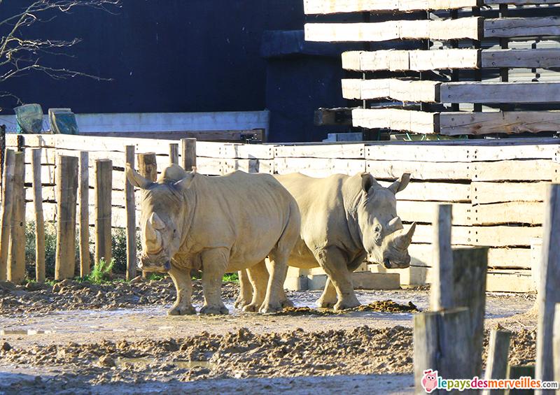 rhinoceros zoo de paris