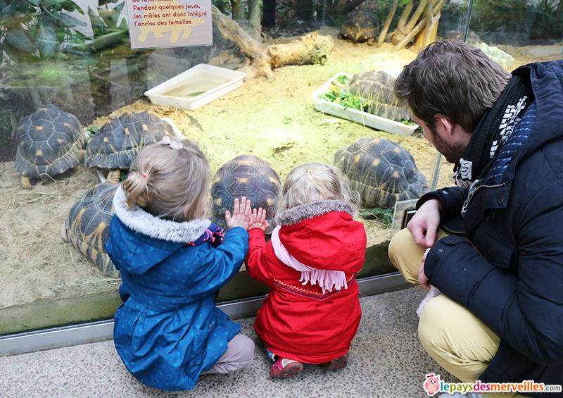 zoo de paris Tortue