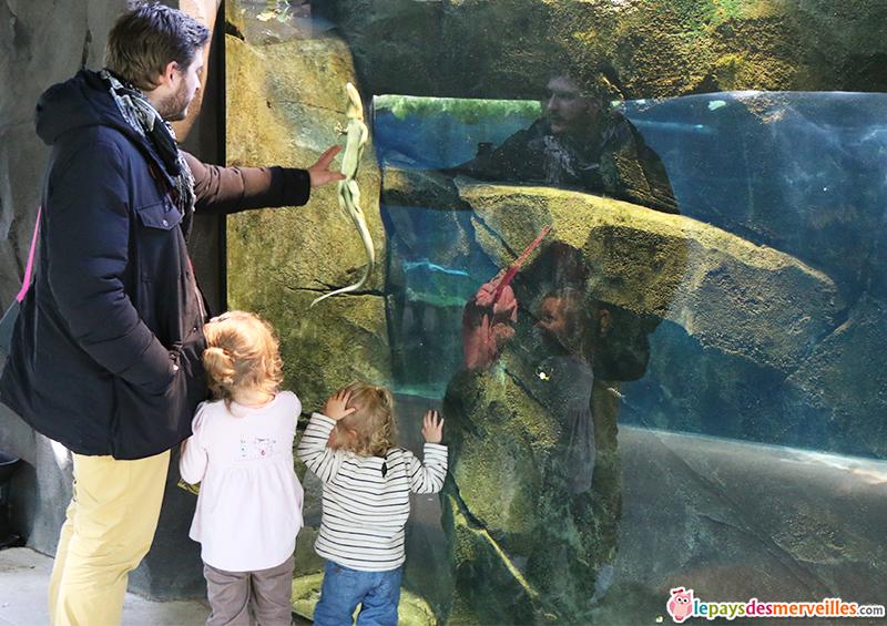 zoo de paris lezard