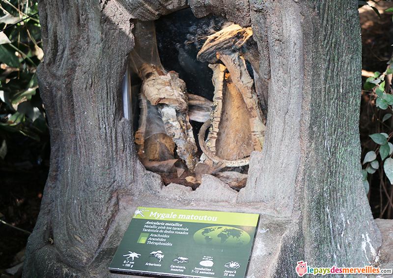zoo de paris terrarium de la mygale