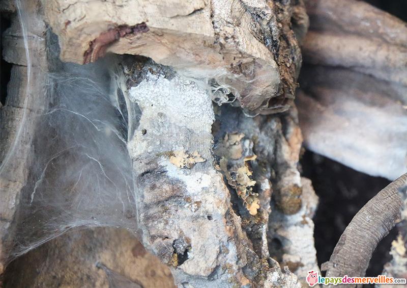 zoo de paris toile d'araignée de la mygale