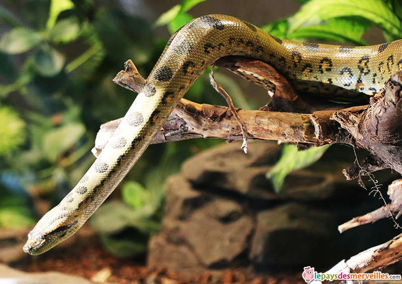 zoo de paris serpent