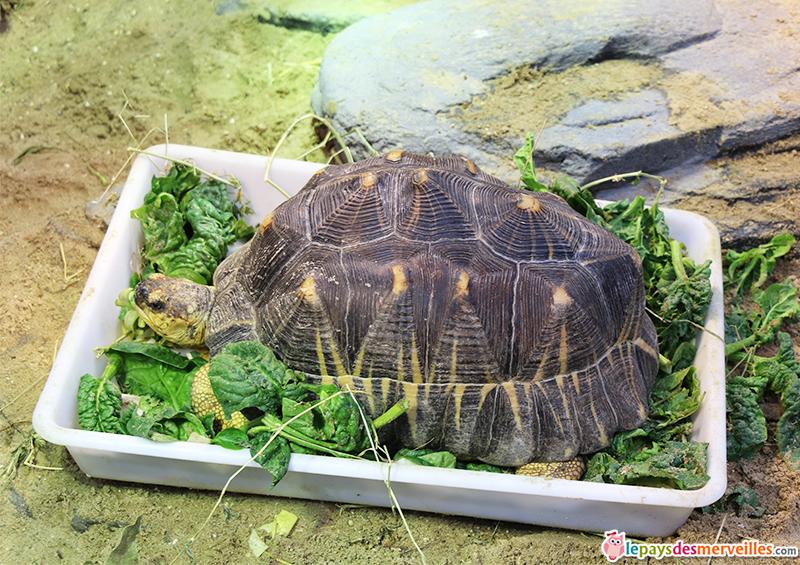 Repas d'une tortue au zoo de Vincennes