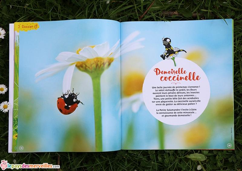 Dossier coccinelle revue petite salamandre (1)