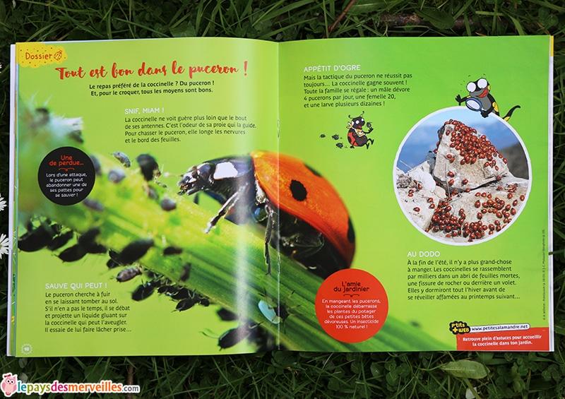 Dossier coccinelle revue petite salamandre (2)