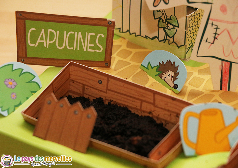 plantation capucines