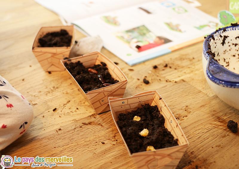 plantation haricot mais capucine