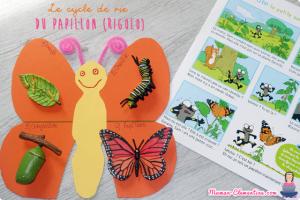 bricolage cycle vie papillon