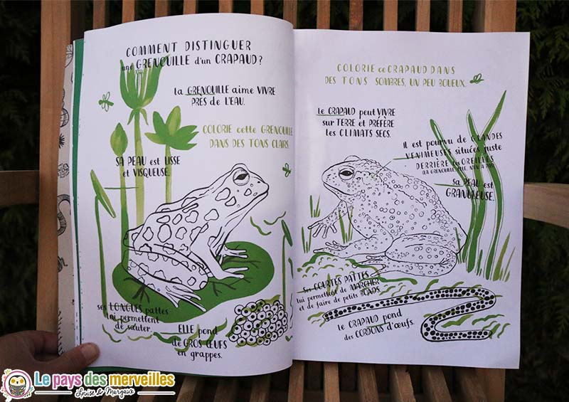 difference crapaud grenouille