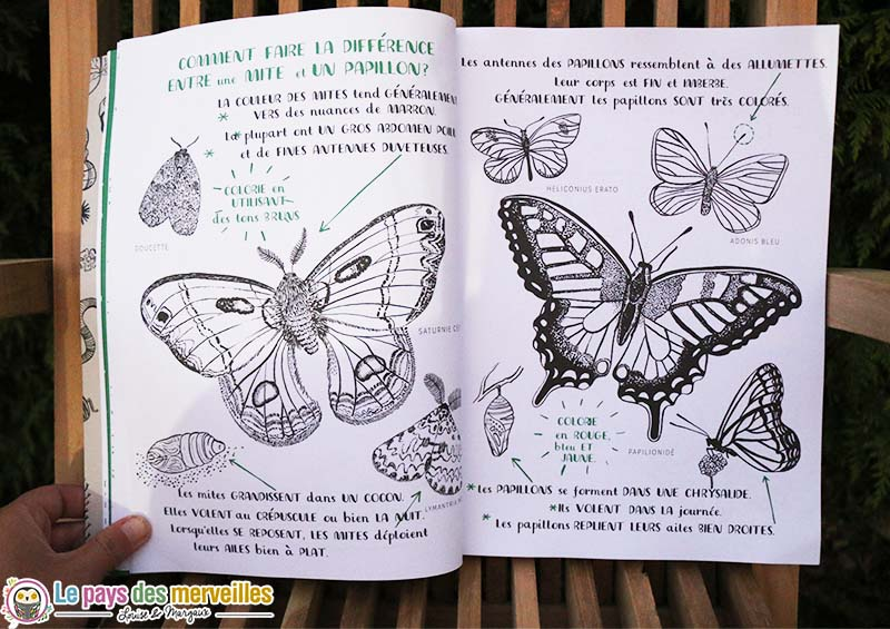 difference mite papillon