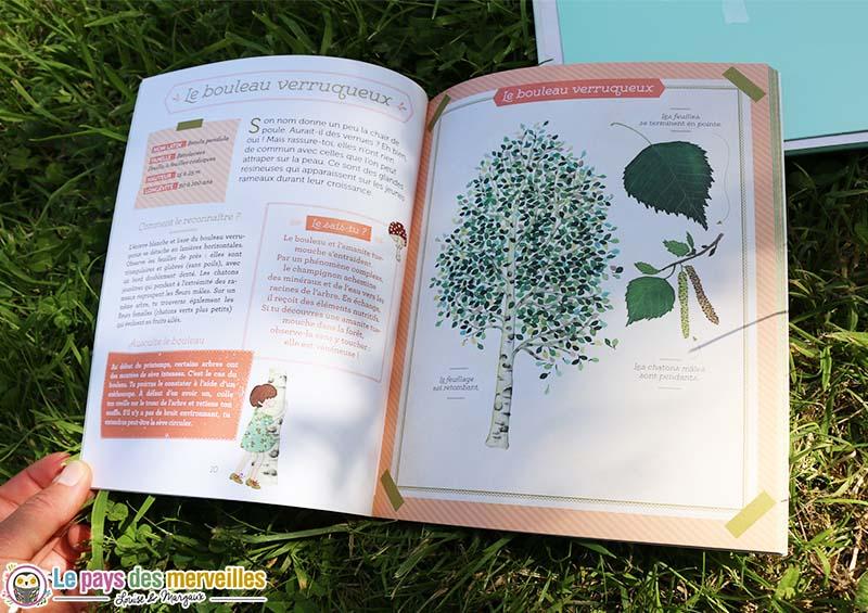 herbier bouleau