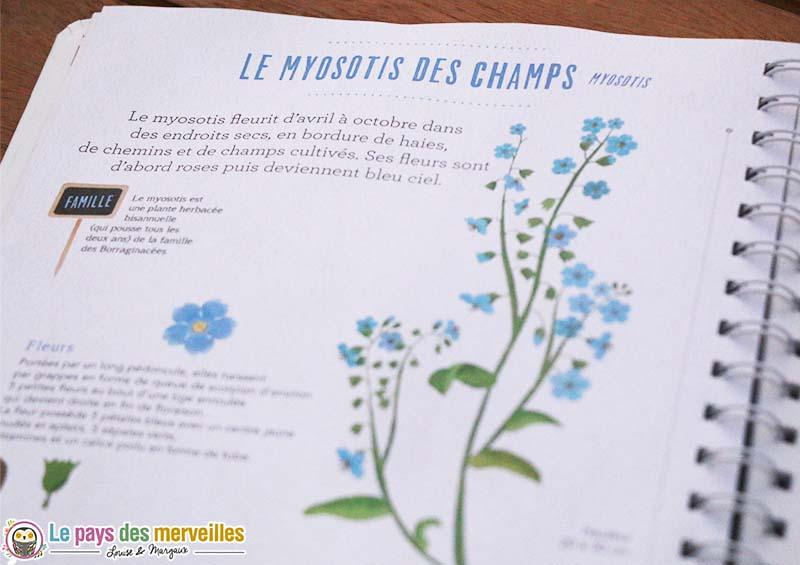 herbier fleurs myosotis