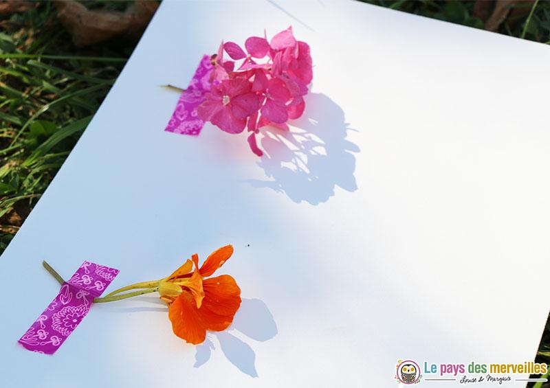 activite dessin fleur