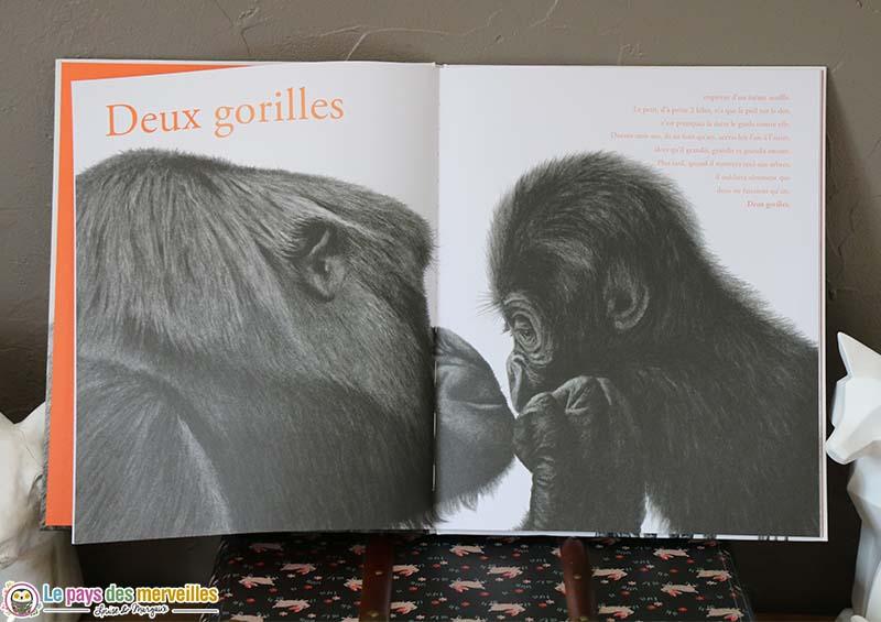 illustration au fusain de deux gorilles
