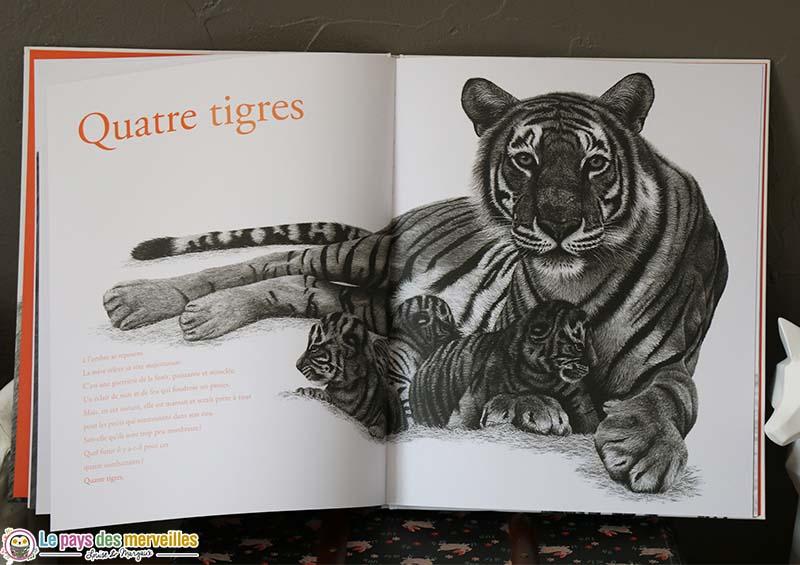 Illustration au fusain de quatre tigres