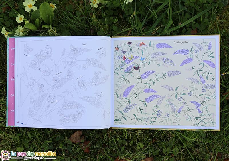 illustrations le jardin à papillons