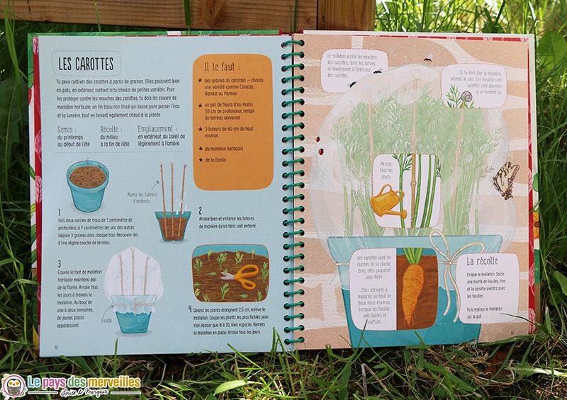 fiche détaillée sur la culture en pot de la carotte