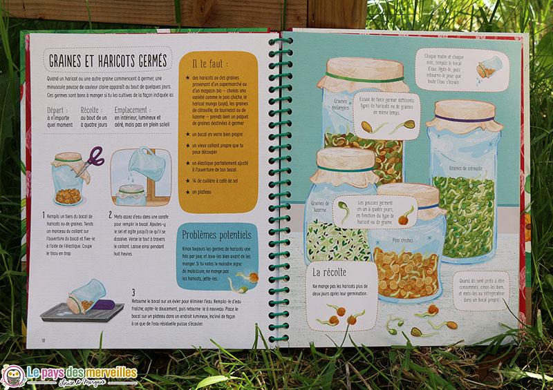 comment cultiver des graines et haricots germés