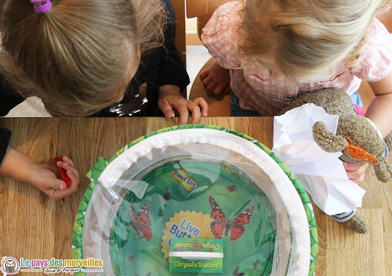 élevage de papillons enfant