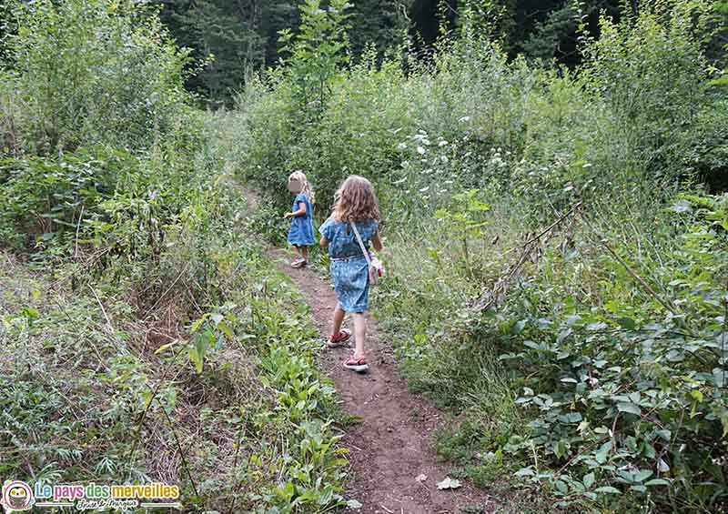 balade dans la forêt de Volvic