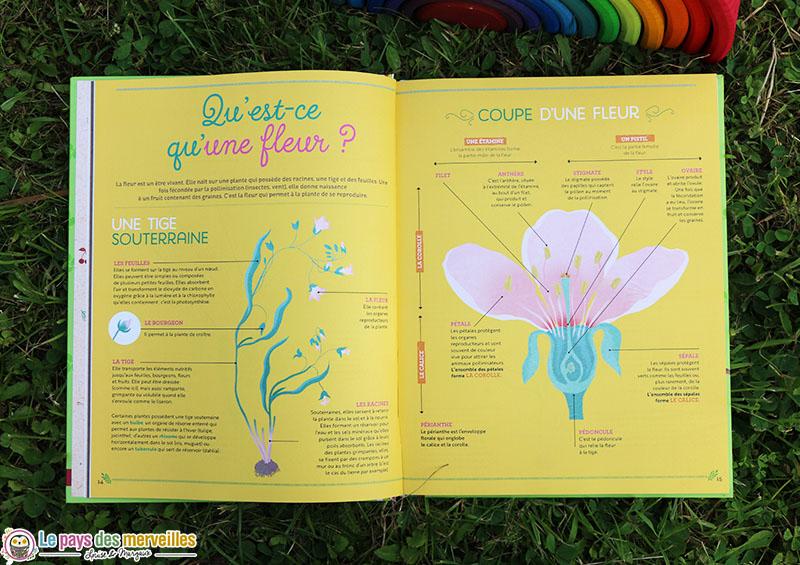Schéma d'une fleur