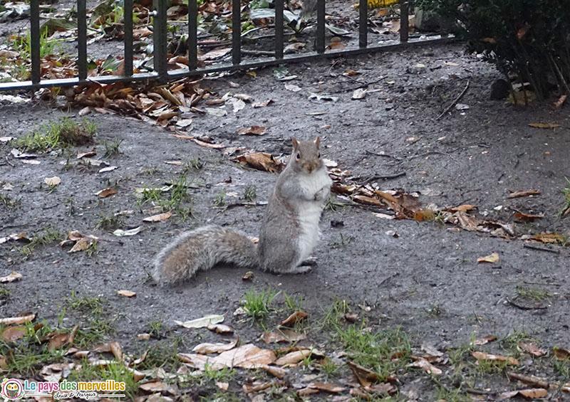 Parc avec des écureuils à Londres