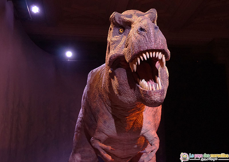 Natural History Museum tyrannosaure