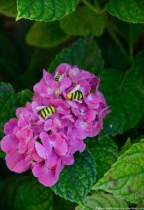 abeilles en pâte fimo