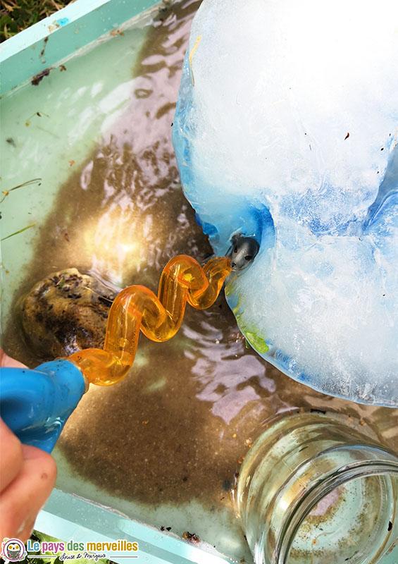 animaux marins prisonniers dans un glaçon
