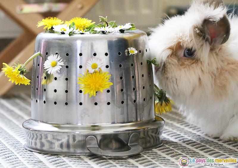 Fleurs comestibles pour lapin