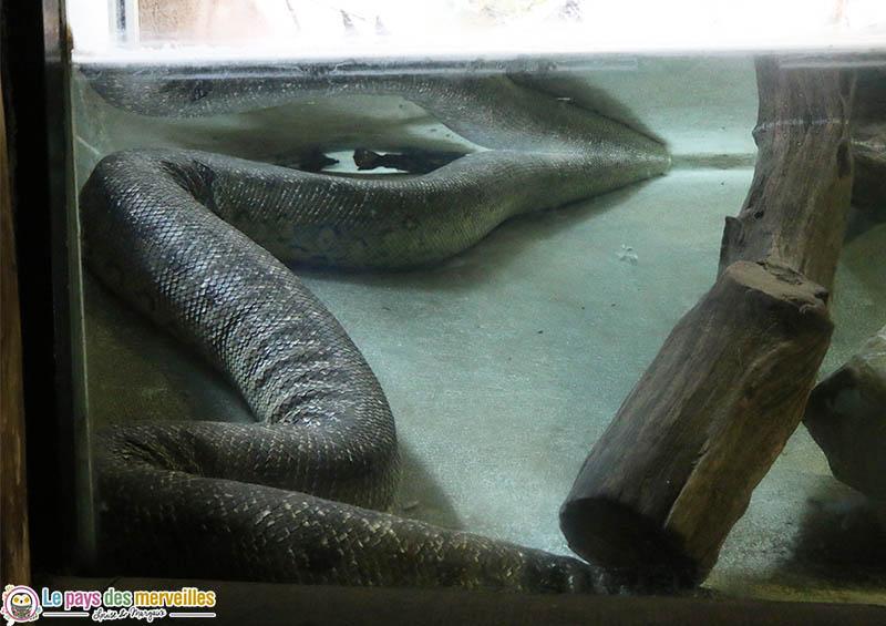 Corps anaconda géant